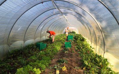Farm News October 2020