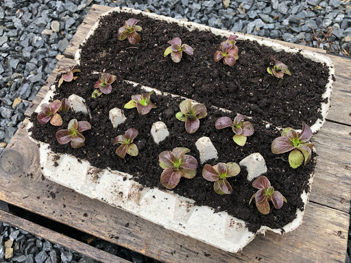 5 Sustainable Ways to Grow a Home Garden